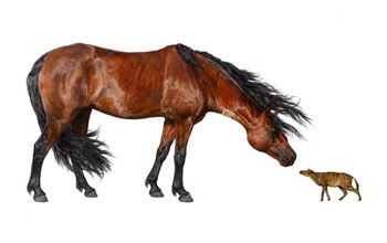 An artist's reconstruction of Sifrhippus compared with a modern horse.