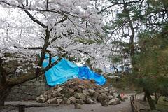 鶴ヶ城の石垣