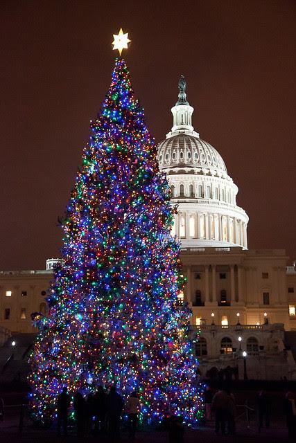 Capital Xmas Tree
