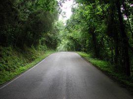Papel de parede 'Estrada e Floresta'
