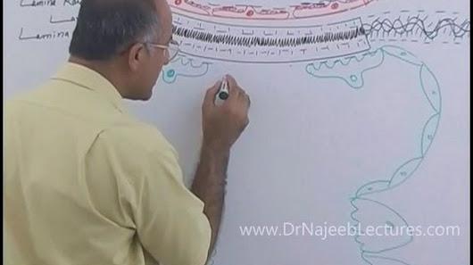 Dr Najeeb Renal Physiology Lecture Virgilio Fidanza Mezzo Corpo