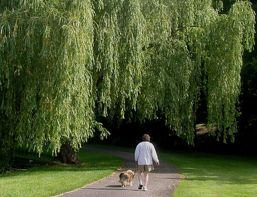 2 under  the willow