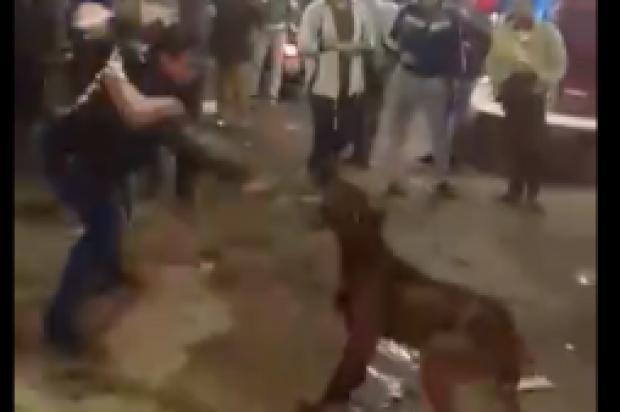 Ισλαμικά ερπετοειδή της Αιγύπτου σφάζουν και χτυπούν σκύλο με στυλιάρια, φωνάζοντας «ο αλλάχ είναι μεγάλος»!
