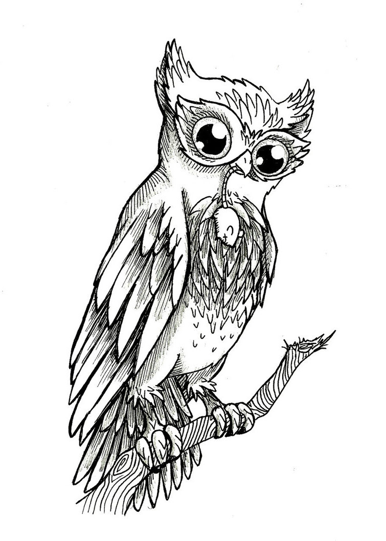 Realistic Owl Drawing at GetDrawings | Free download