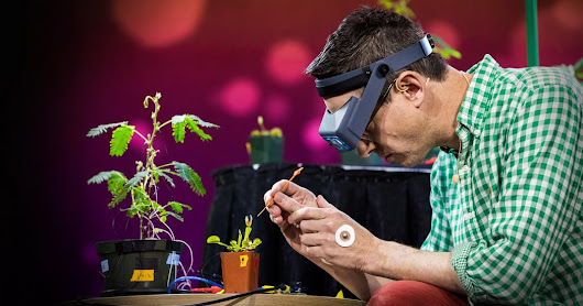 Electrical experiments with plants that count and communicate