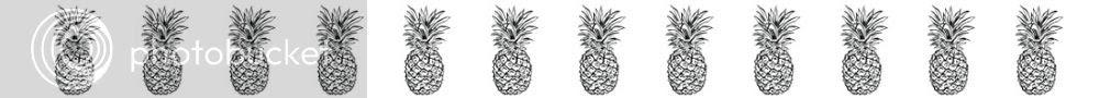 pineapple row photo pineapplerow.jpg