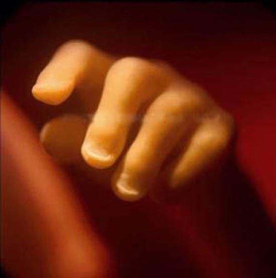 Η διαδικασία γονιμοποίησης σε συγκλονιστικές macro φωτογραφίες (21)
