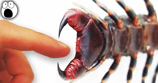Top 10 Most Painful Animal Stings In The World