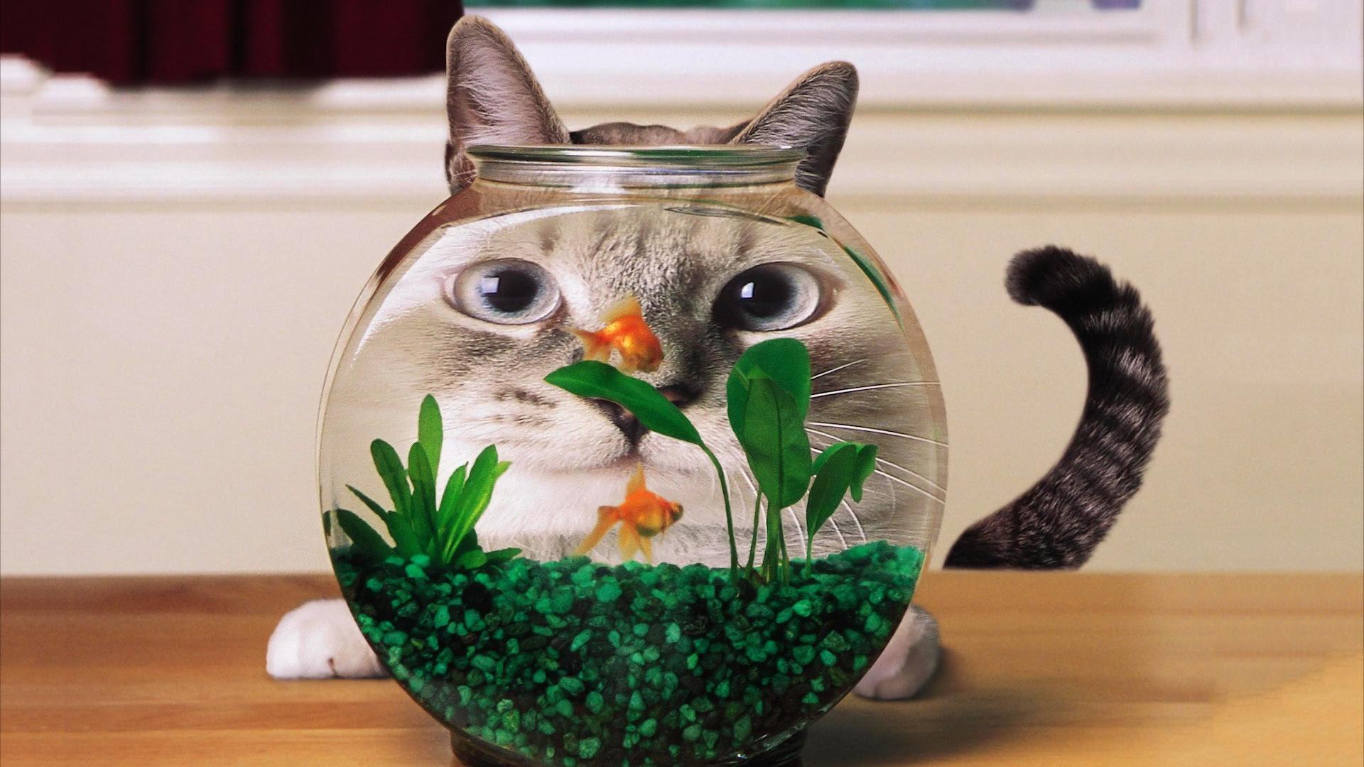 Cat face in jar [1920x1080]