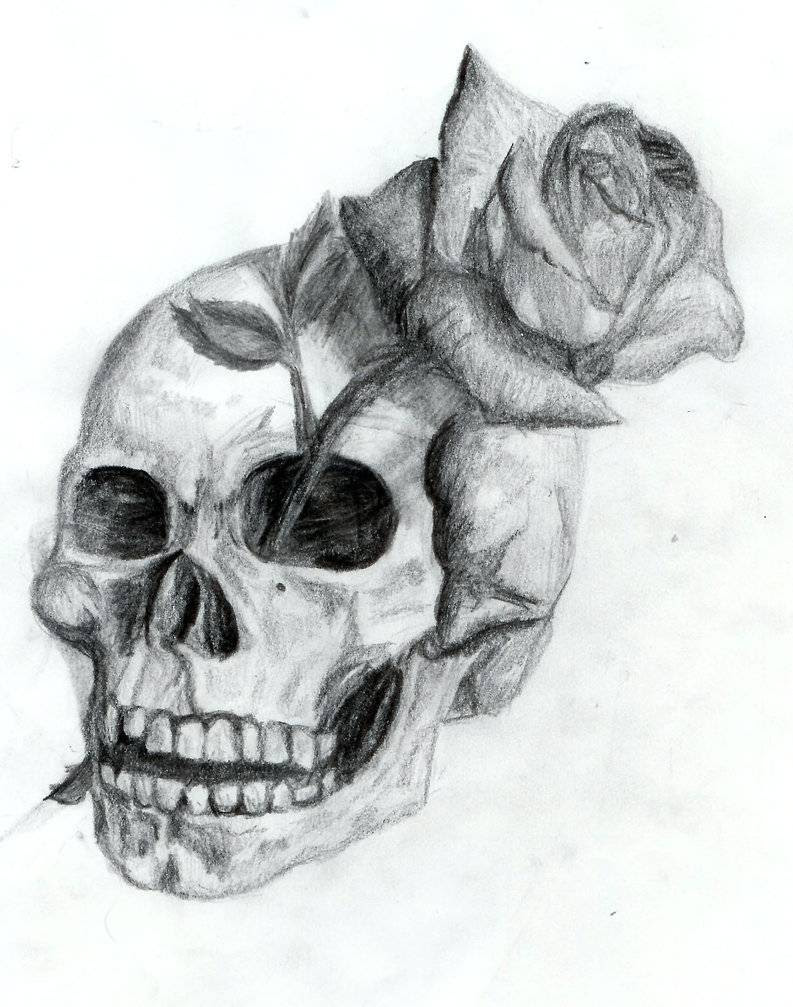 Free Drawings Of Skulls Download Free Clip Art Free Clip Art On