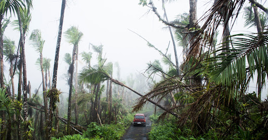 Tropical Forests Suffered Near-Record Tree Losses in 2017