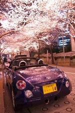 桜コペン01
