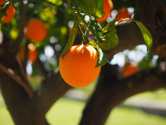 Unusual Idea to Cure Citrus Greening Disease - Elliott Killian