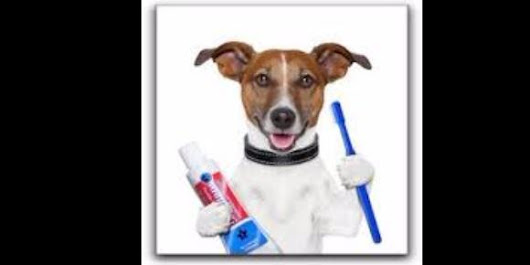 What Is a Dental Cleaning and Why is It Important? - Blue Lake Animal Care Center