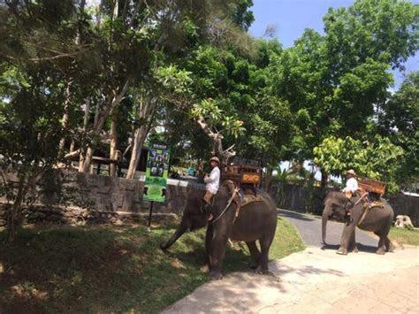 Bali Elephant Ride (Ubud, Indonesia): Top Tips Before You