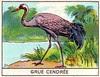 mart oiseaux119