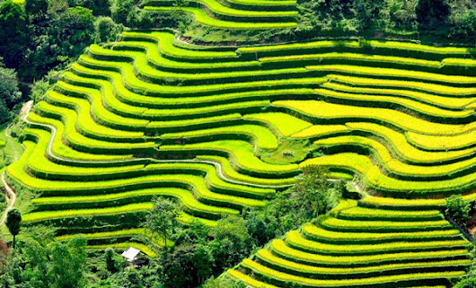 Hoang Su Phi terrace field and the most attraction places for tourist in Ha Giang