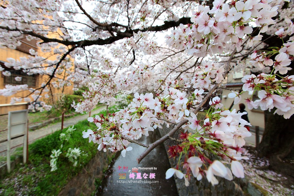 2013-04-04-16h35m10IMG_4878