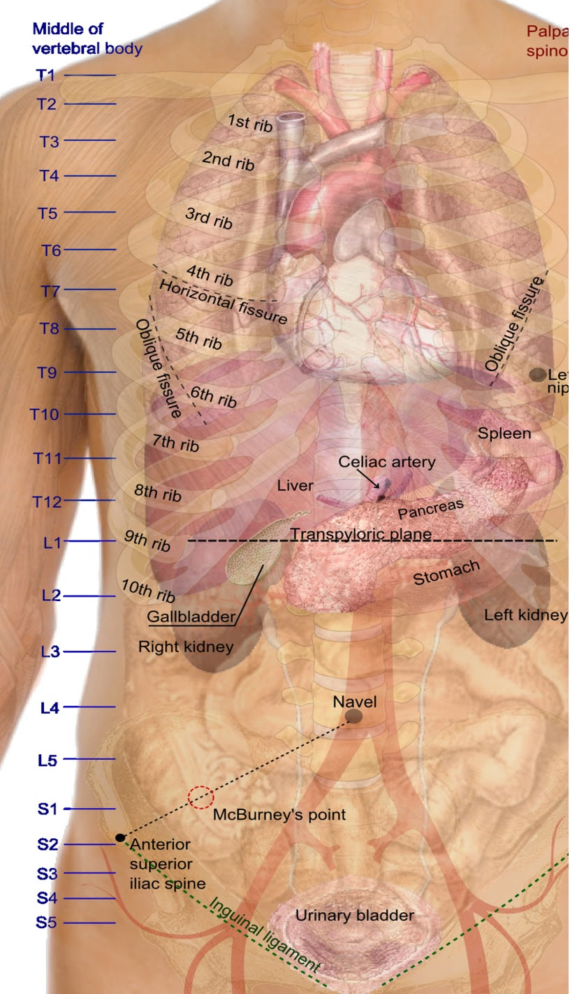 Female Body Diagram