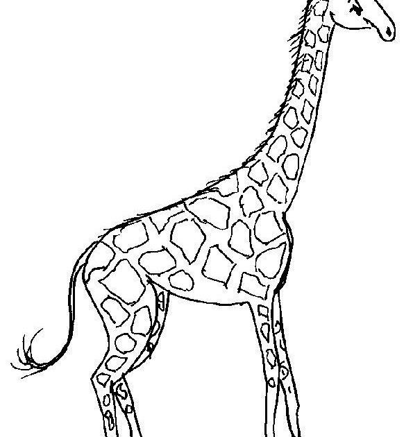 malvorlagen kostenlos giraffe