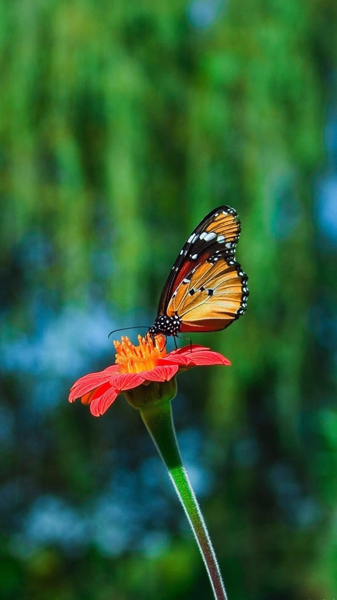 Free Butterfly Backgrounds For Android | PixelsTalk.Net