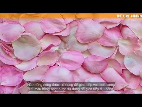 Tìm hiểu ý nghĩa của màu hồng