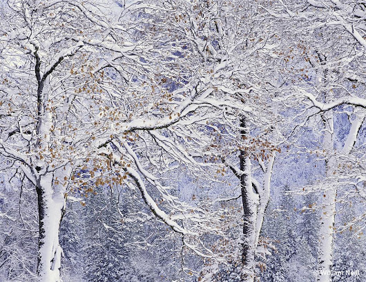 Winter Etchings - Outdoor Photographer