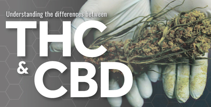 Image result for Comparing THC vs. CBD: What's the Difference?