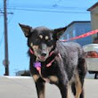Discover why senior dogs rule: Fall in love with Mina