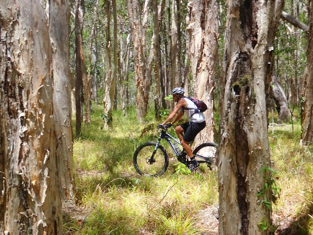 Melaleuca Forest - Eumundi