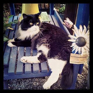 Fat lounging #cat