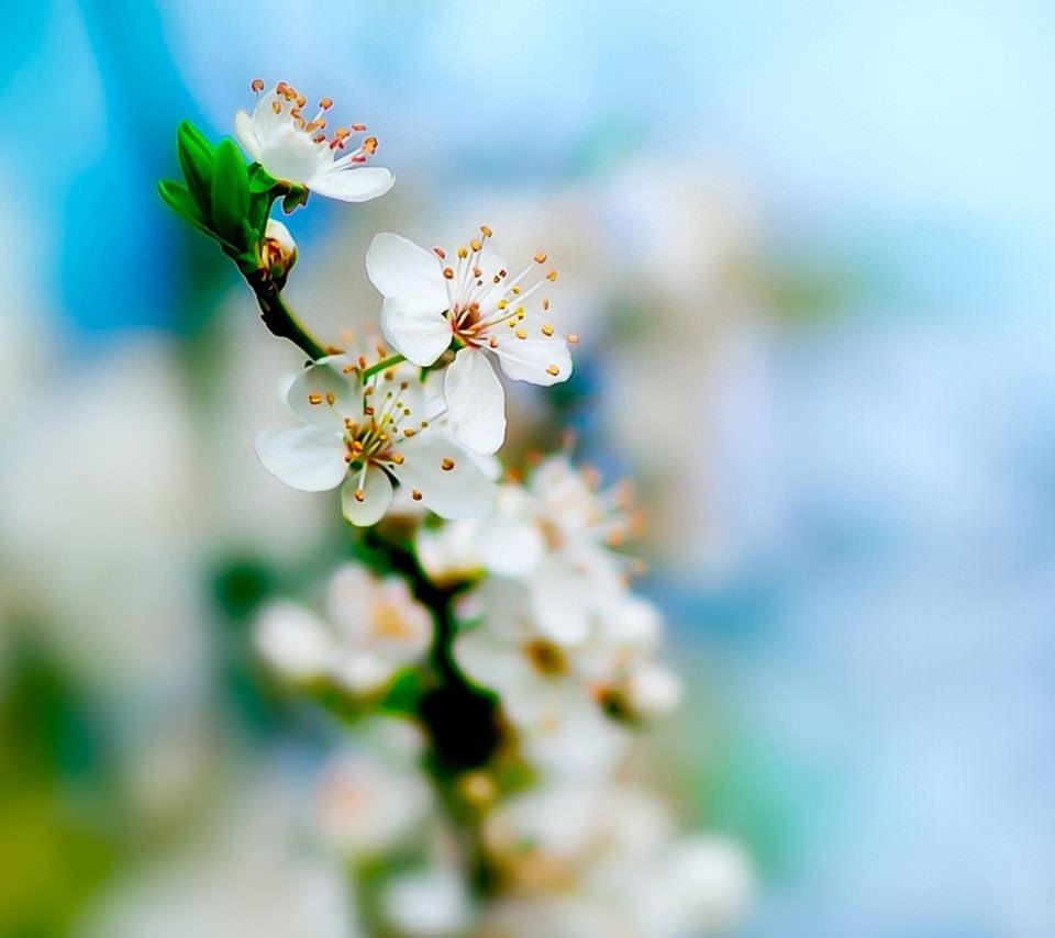 梅の花 スマホ用壁紙 Android 960 854 Wallpaperbox