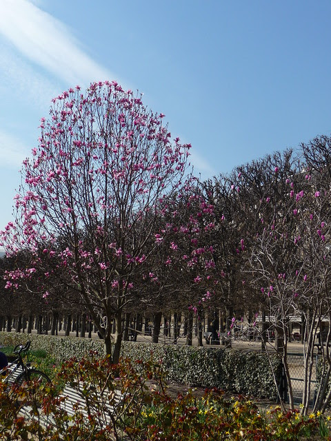 Paris - 1st day of Spring