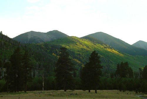 Changing Aspen