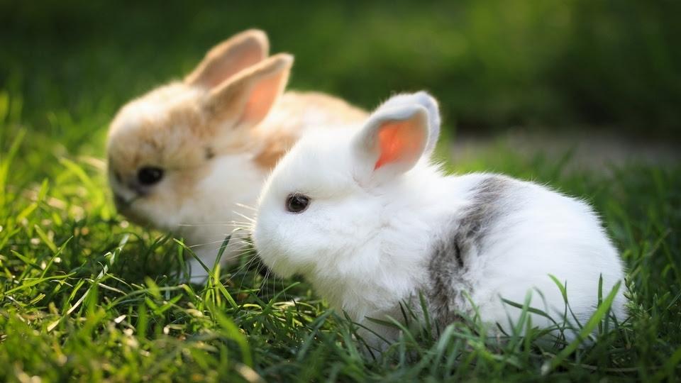 Tips Memelihara Kelinci: Ketahui 4 Tanda Kehamilan Kelinci