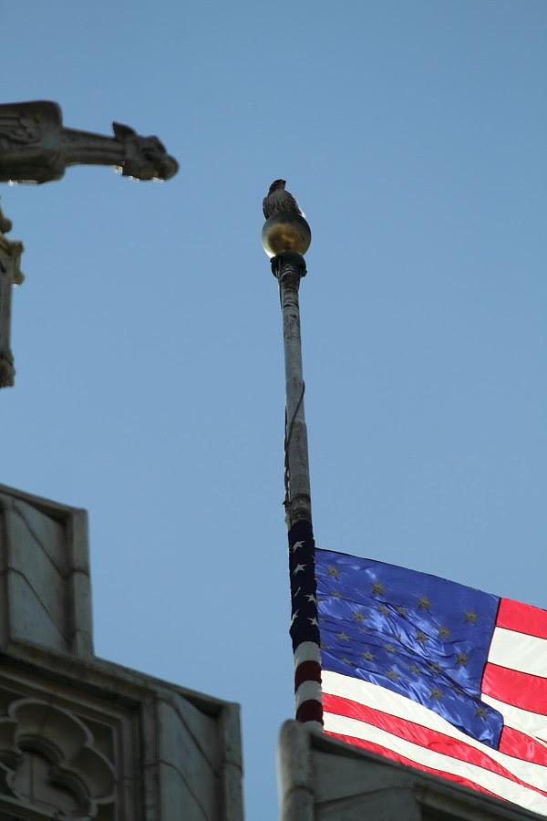 Patriotic Hawk