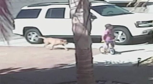 Boy attacked by dog, saved by cat and the missing link no one is talking about | Michigan Dog Training