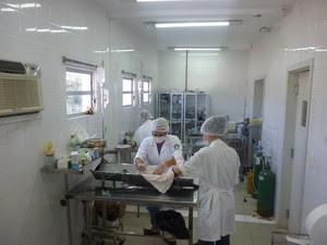 Animais que precisam de cirurgia são tratados no ambulatório da prefeitura (Foto: Bem Estar Animal/Divulgação)