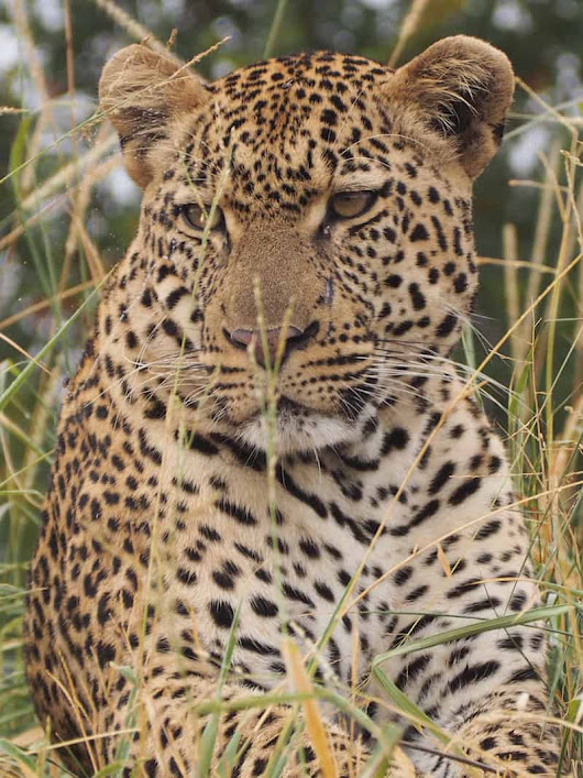 Business Class to Bush: Luxury Safari Trip into Kruger National Park - Elena Paschinger