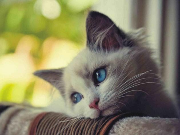 gato-triste-5
