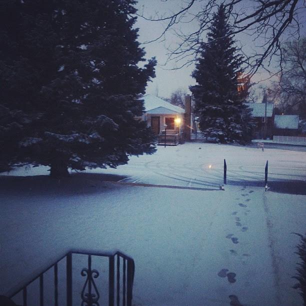 Day40 some pretty snow again :) 2.9.13 #jessie365