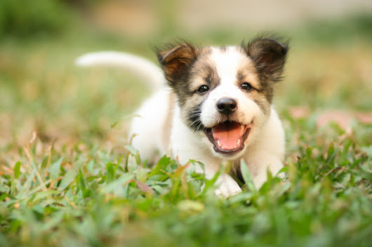 12 Adorable Puppies to Inspire Your Online Marketing