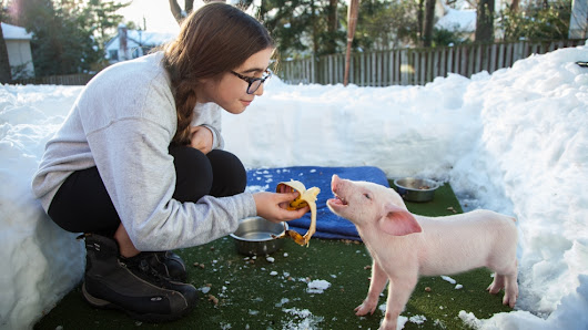 Chevy Chase family saves freezing piglet from roadside