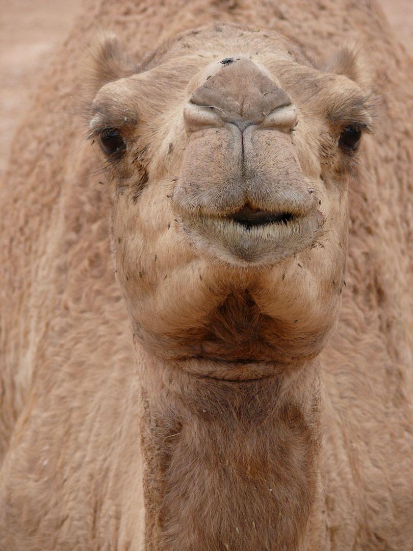 2012.02.24, Happy Friday! (Oman)