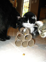 The cats investigating their treat challenge
