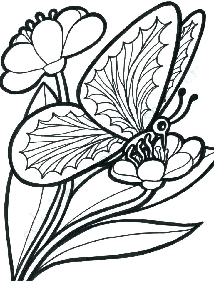 Coloring Pages Of Roses And Butterflies at GetColorings ...