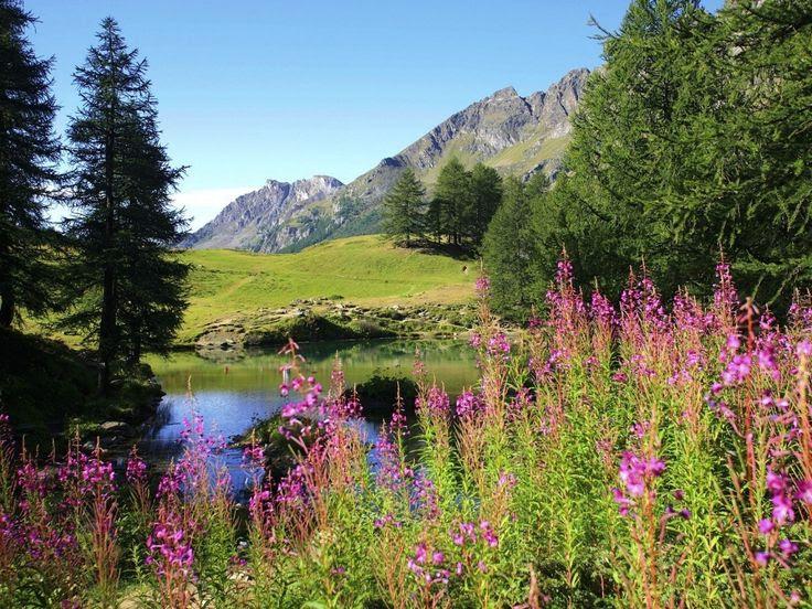 Google Image Result for http://img.wallpapermenu.com/a-sunny-day-in-spring-season_11954_1024x768.jpg