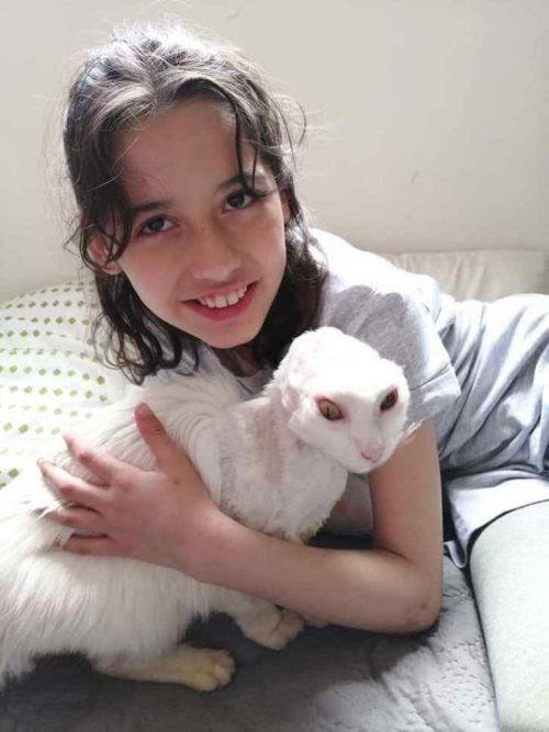 Una valiente gatita sobrevive al cáncer pero comienza a tener problemas en el corazón