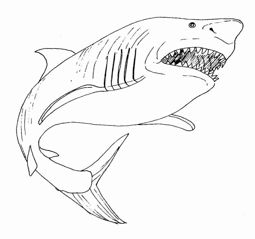 Megalodon Coloring Page at GetColorings.com   Free ...