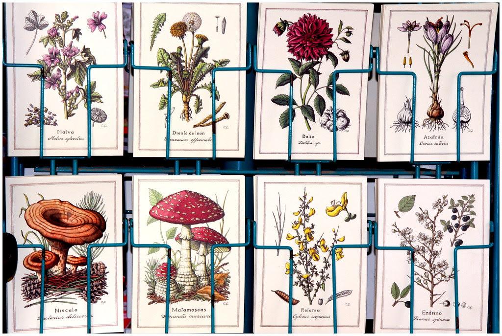 Postales de flores y otros
